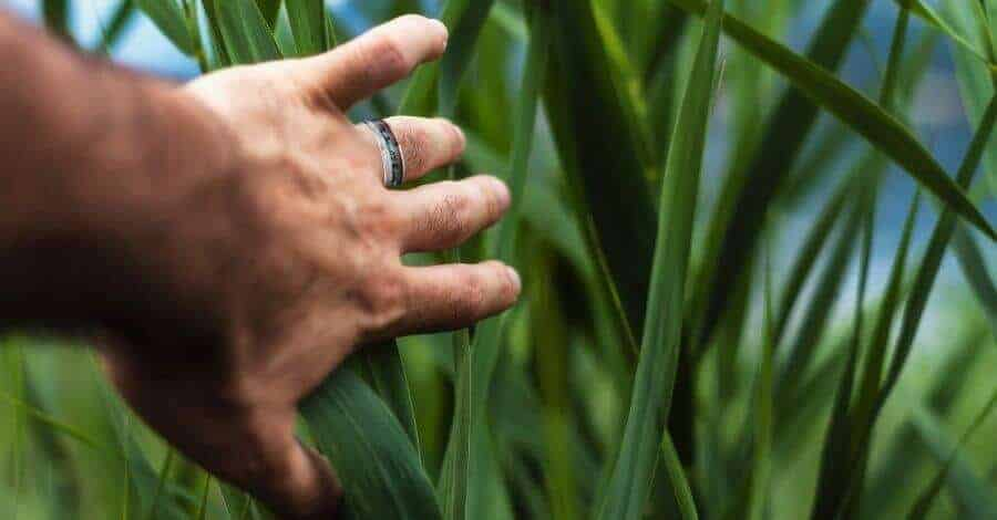 Man wearing titanium ring pushes lush green leaves out of the way
